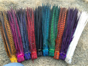 "DYED ENGLISH RINGNECK Pheasant Feathers 20-26"" MANY COLORS! Costume/Hats/Craft"