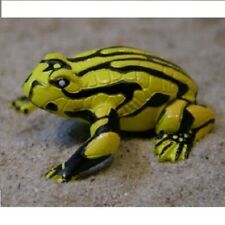 Coroboree Frog - Science and Nature Australia (75361): vinyl toy animal figure