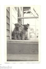 c 1920's PHOTO BABY GERMAN SHEPHERD PUPPIES FUTURE POLICE DOG MELFORD KENNELS LA