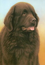 More details for nigel hemming just dogs - brown newfoundland newfs newfies working dogs art