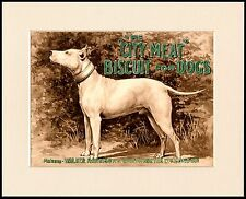 BULL TERRIER EARLY TYPE DOG GREAT ADVERT PRINT MOUNTED READY TO FRAME