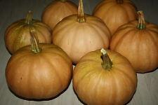 Seminole Kürbis - Pumpkin 10+ Samen - Süß UND ERTRAGREICH!