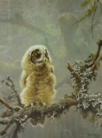 Vintage Art Robert Bateman Continuing Generations Baby Spotted Owl Young Bird
