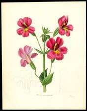 1837 Original Antique HAND COLOURED Botanical Print MIULUS ROSEO-CARDINALIS (194