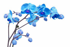 BEAUTIFUL BLUE ORCHIDS CANVAS PICTURE #18 STUNNING FLORAL HOME DECOR A1 CANVAS