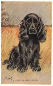 1937   SPANIEL   A Country Life for Me  MAC  Lucy Dawson  Dog Postcard
