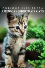 American Shorthair Cat - Curious Kids Press: Kids Book About Animals And Wi.