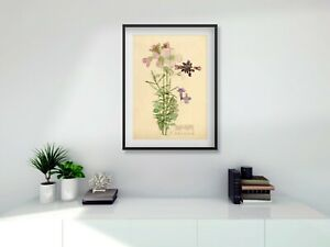 Rennie Mackintosh black FRAME PRINT Cuckoo Flower A4 digital print 11 x 14 frame