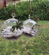 """2 Pcs Terrarium Planter Succulents Plant Hanger  5"""" Round"""