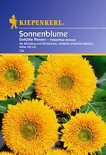 Kiepenkerl - Sonnenblumen 734 * gefüllte Riesen * gelb wächst schnell