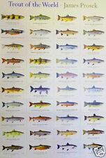 """Trout of the World by James Prosek 18"""" x 27"""" Wall Poster Fish Drawings WN4819"""
