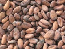 100 LBS CACAO BEANS RAW ORGANIC HAND SELECT FERMENTED GOURMET HISPAÑIOLA TYPE