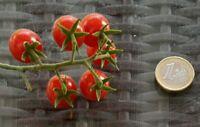 ☺200 graines minimum de tomate porte greffe  petit moineau
