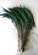 "1,000 Pcs PEACOCK SWORDS Natural Tail Feathers 10-12"" Craft/Art/Costume/Bridal"