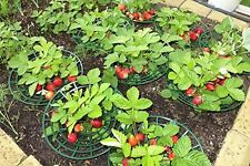 Strawberry Supports - Easy to Use Strawberry Plant Support 6pcs
