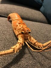 Real Spiny Lobster Tail Fully Treated and emptied shell! Free Shipping For 2+Buy