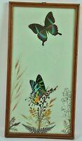 Urania Ripheus Schmetterling im Rahmen 60er Butterfly Bild Vintage Deko 7EK4