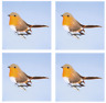 4x Premier Christmas Robin on a Clip Tree Decoration