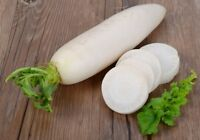 Daikon Tokinashi Seeds Japan Daikon 50 seeds Farmer's dream
