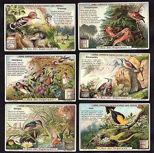 In Birdland German Liebig Card Set 1900 Birds Kingfisher Goldfinch Pirol Poetry