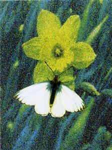 SALE!!! PACKET OF 12 GREEN-VEINED WHITE BUTTERFLY MINI GIFT NOTELETS FREE P&P