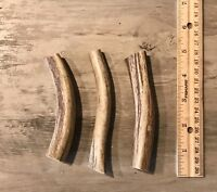 SMALL Elk/Deer **NATURAL SHED** Antler Premium Dog Chew (1 Each)