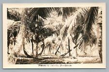 Palm Trees—Playa de Bolada Honduras RPPC Rare Antique Foto Photo 1920s