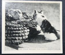 Cat Hunting a Sitting Duck       Vintage Photo Card