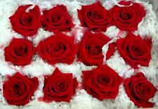 ROSA ROSE  Rossa Stabilizzata 12pz  Disidratate stabilizzate  FIORI ARTIFICIALI