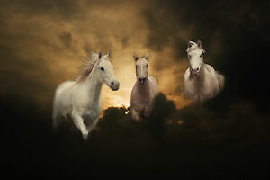 White Horses in Clouds Large Photo Poster Horse Montage Pony A3 Size Picture