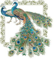 14 count aida needlepoint cross stitch peacock kit with colorful chart D042