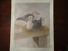 Robert White Large Sea Gulls Signed Print Lithograph 42 of 600 Birds Nest