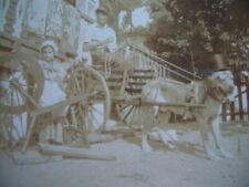 New Orleans Louisiana? Postcard Dog Top Hat Goggles Pulling Wagon Spinning Wheel