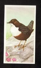 Dipper--1990 Brooke Bond British Tea Card