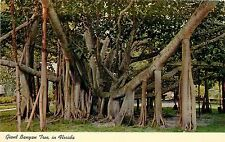 Grand Banyan Tree Tropical Florida Fl Postcard