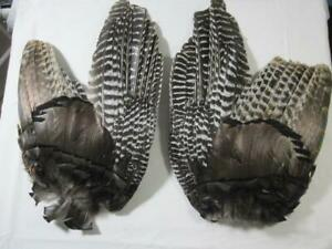 Eastern Wild Turkey Feathers RIght and Left Wings Craft Display