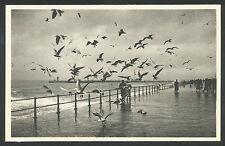 Oostende  Zeemeeuwen op de zeedijk, bij storm