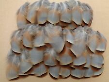 """100 French Partridge Flank Feathers 1.5"""" - 3"""" - Fly Tying, Crafting"""