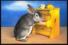 574034 Roger Plays Piano Blue Rex Rabbit A4 Photo Print