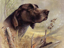 GERMAN SHORTHAIRED POINTER LOVELY DOG GREETINGS NOTE CARD BEAUTIFUL HEAD STUDY