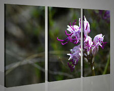 Quadri moderni paesaggi ORCHIDEA VOL III fiori stampe su tela canvas 130x90
