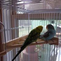 Holz Papagei Vogel Käfig Sitzstangen Stehen Plattform Pet Sittich Budgie Ratte-S