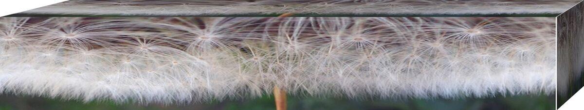 One Dandelion Wish
