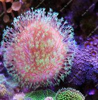 Fresh Sale 100Pcs a Bag Fresh Live Aquarium Plants Aquatic Plants Seeds