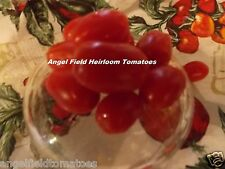 Roma Heirloom Cherry Tomato Seeds 20 Fruit Vegetable Seeds From Maryland