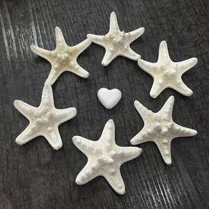 10pcs Natural SEA SHELL Starfish Craft DIY Decorate Gift Kit Wedding Props Decor