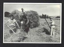 SAINT-JEAN-de-SOUDAIN (38) AGRICULTEUR avec ATTELAGE CHEVAL , FENAISON en 1990
