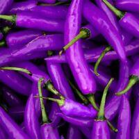 100pcs Lila Cayennepfeffer lang Chili Paprika Samen Saatgut Pflanze Sämereien