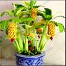 100 PCS Seeds Dwarf Banana Fruit Bonsai Trees Perennial Plants Shipping Free New