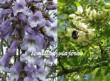 Paulownia tomentosa 100 + Robinia pseudoacacia 100 semillas  seeds graines samen